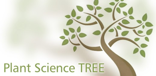 The Plant Science TREE by University of Leeds \'highly commended\' at international MEDEA Awards