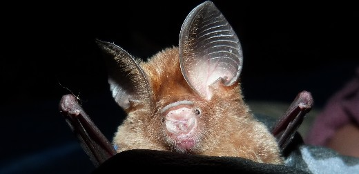 Bats wake up and smell the coffee